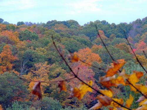 30 autumn